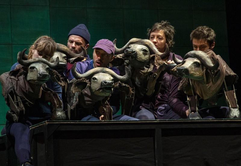 Buffles - Stage théâtre de marionnettes